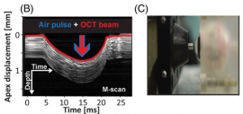 Assessment of the influence of viscoelasticity of cornea in animal ex vivo model using air-puff optical coherence tomography and corneal hysteresis